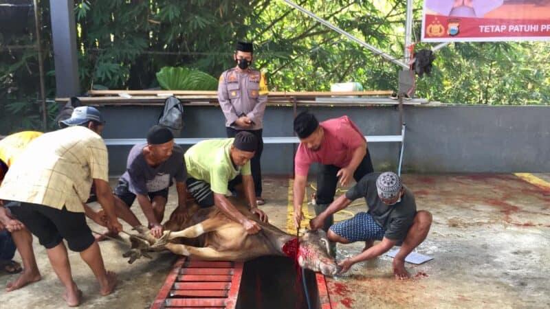 Jajaran Polres Wajo memotong 14 ekor sapi kurban, yang akan dibagi - bagikan kepada masyarakat tidak mampu (foto : Istimewa)